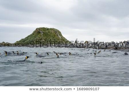 ペンギン スイミング 立って 氷 実例 自然 ストックフォト © bluering