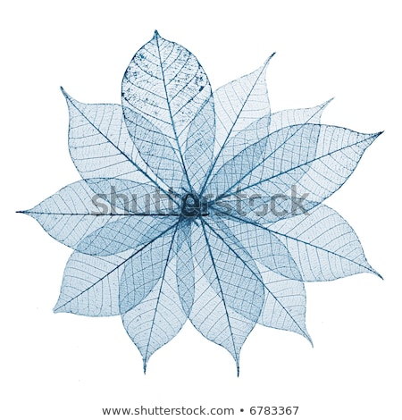 skeleton leaves flower composition on white background stock photo © rufous