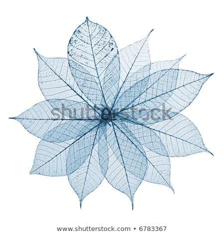 skeleton leaves flower composition on white background stock photo © rufous