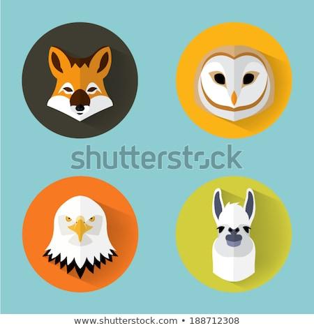Águia · cara · pássaro · esportes · mascote - foto stock © curiosity