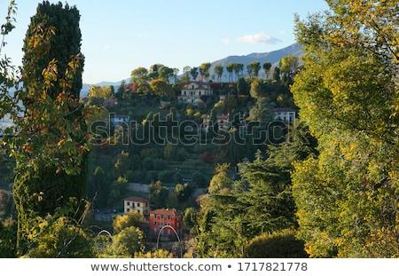 Verde ladera vina ciudad lago naturaleza Foto stock © Artlover