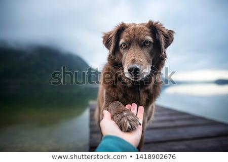 Ludzi miłości portret mały chłopca łuk Zdjęcia stock © pressmaster