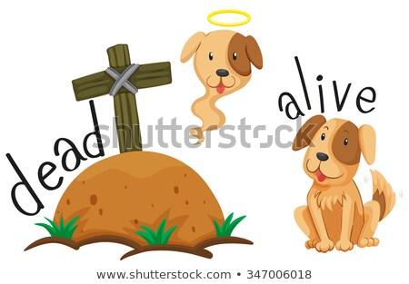 Oposto palavras morto vivo ilustração cão Foto stock © bluering