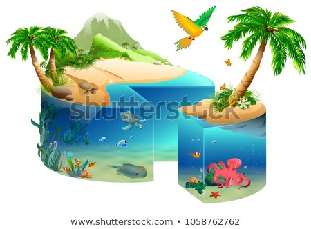 Тропический · остров · пальма · черепахи · иллюстрация · вектора · формат - Сток-фото © orensila