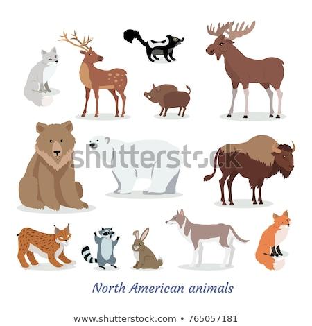 American Bison Cartoon Icon in Flat Design Stock photo © robuart