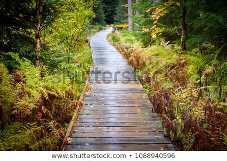 út erdő Csehország erdő természet páfrány Stock fotó © glorcza