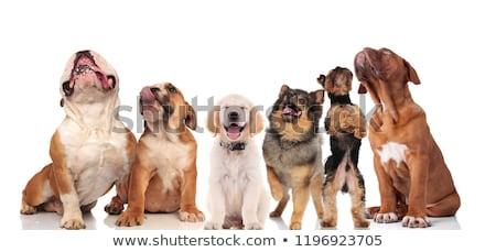 grande · equipe · seis · bonitinho · cães · halloween - foto stock © feedough