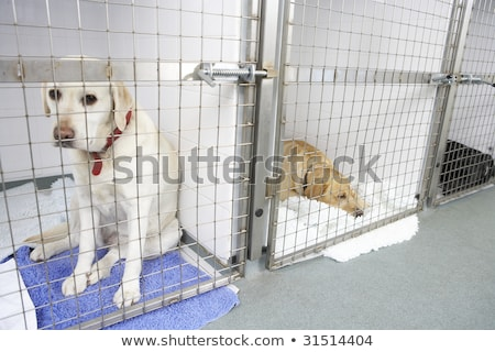 Hond pen triest dier ziek huisdier Stockfoto © monkey_business