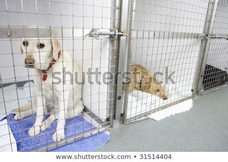 cão · gaiola · casa · jovem · sozinho · branco - foto stock © monkey_business