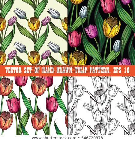 コレクション 手描き 花 イラスト スケッチ スタイル ストックフォト © kollibri