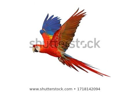 Rood vogel witte cartoon karakter natuur Stockfoto © liolle