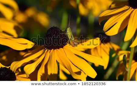 緑 · グラスホッパー · 座って · 花 · 草 · 庭園 - ストックフォト © nemalo