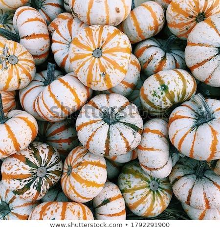 white gourd Stock photo © devon