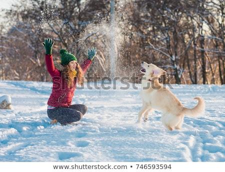 снега собака английский дог красный Сток-фото © greatdividephoto