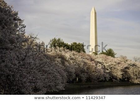 Washington · Anıtı · pembe · ABD · bahar · Washington · DC - stok fotoğraf © backyardproductions