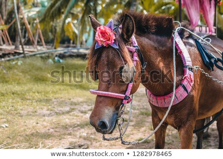 country woman carrying a bridle stock photo © lovleah