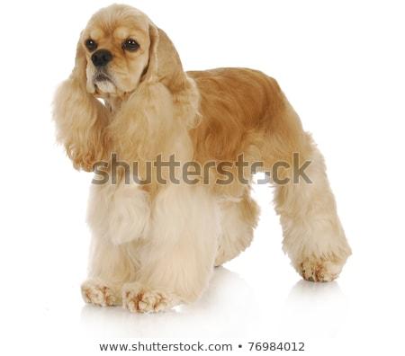 白 犬 肖像 孤立した 動物 ストックフォト © vtls