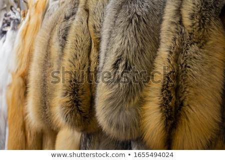 Fox · fourrures · utile · belle · polaire - photo stock © arsgera