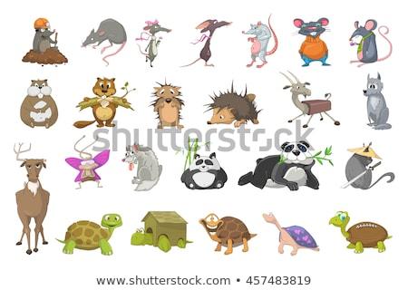 grappig · schildpad · rugby · geïsoleerd · witte - stockfoto © RAStudio