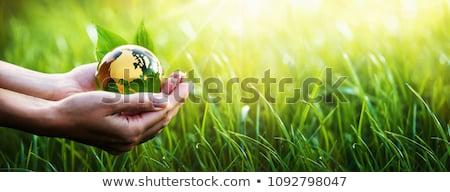 Zöld bolygó absztrakt fák fű windszörf Stock fotó © WaD