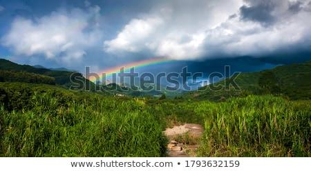cacto · dourado · pôr · do · sol · blue · sky · céu · sol - foto stock © actionsports
