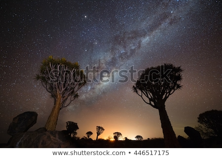 Quiver tree landscape Stock photo © EcoPic