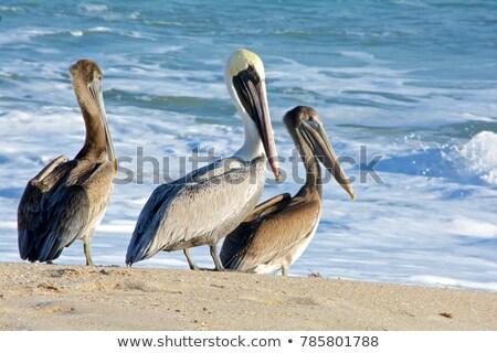 pózol · elvesz · törik · édenkert · tengerpart · víz - stock fotó © arenacreative