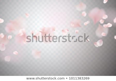 menina · flores · brancas · longo · cabelo · escuro · flor - foto stock © tanya_ivanchuk