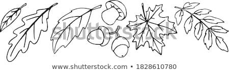 ドングリ 図面 色 黒白 自然 にログイン ストックフォト © bruno1998