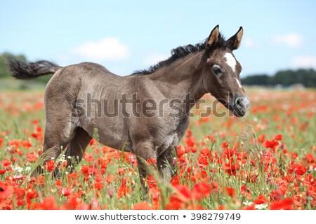 alone colt stock photo © cosma