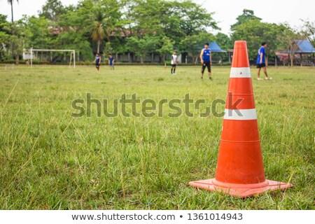 cones on grass stock photo © valeriy