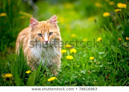 Macska kép elmosódott fény háttér vicces Stock fotó © Ronen