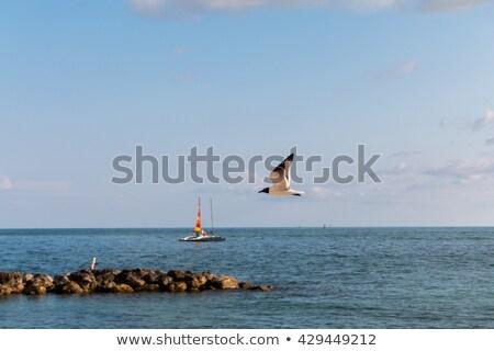 voador · gaivotas · oceano · céu · nuvens · pássaro - foto stock © lunamarina