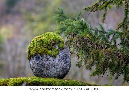 Yeşil yosun taş doku kaya soyut Stok fotoğraf © Kotenko