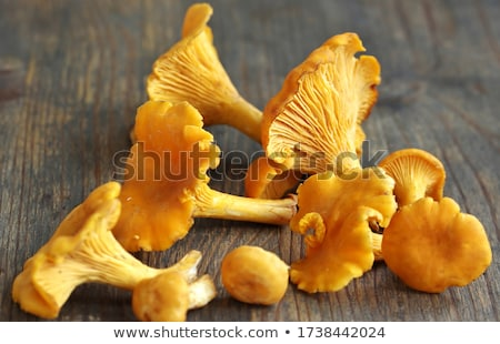 Golden Chanterelles Background Stock photo © zhekos