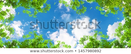 Sky and leafs Stock photo © dmitroza