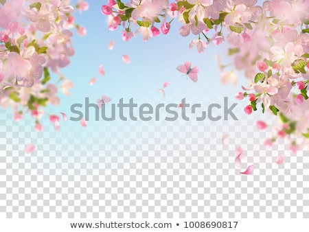 Bandeira sakura flores retangular luz decorado Foto stock © blackmoon979