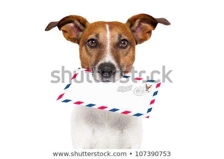 Cute собака почтальон иллюстрация бумаги письме Сток-фото © adrenalina