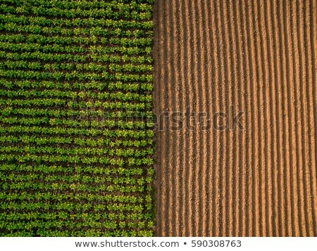 Aerial view of cultivated field from drone Stock photo © stevanovicigor