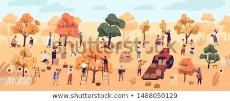 Vrouw ladder boomgaard boom vruchten Stockfoto © IS2