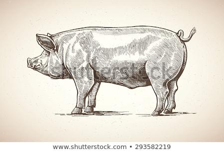 doméstico · porcos · fazenda · aldeia · França · feliz - foto stock © FreeProd