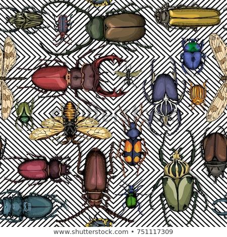 Cucaracha patrón sin costura insectos escarabajo ornamento Foto stock © popaukropa