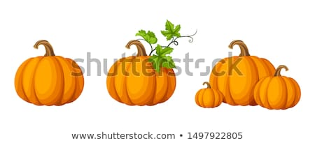 Vector orange pumpkin with leaves and stems isolated  Stock photo © TasiPas