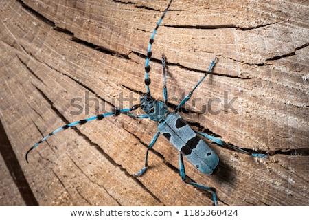 invertebrado · coleção · africano · invertebrados · insetos - foto stock © vapi