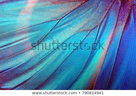Mariposa detalle hermosa tropicales sesión hoja verde Foto stock © fyletto