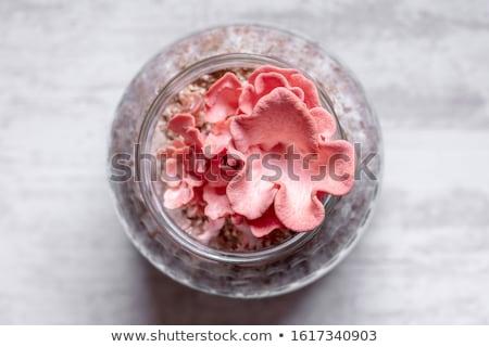 Fresco ostra recipiente ilustração projeto fundo Foto stock © bluering