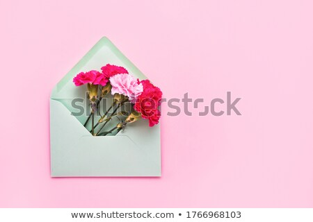 congratulation card with carnation flowers in an envelope on a magenta background stock photo © artjazz