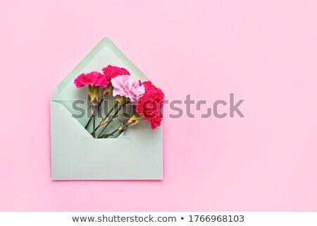 Glückwunsch Karte Nelke Blumen Umschlag magenta Stock foto © artjazz