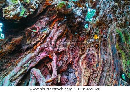 ホロー ツリー 多くの 色 木材 森林 ストックフォト © tilo