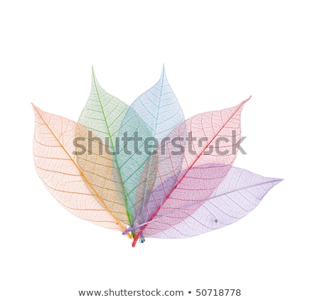 Real leaf with detail vein and various colors Stock photo © Ansonstock